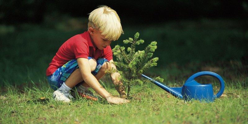 Трудовое воспитание дошкольников
