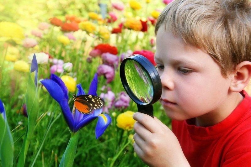 Интеллектуальное воспитание дошкольников