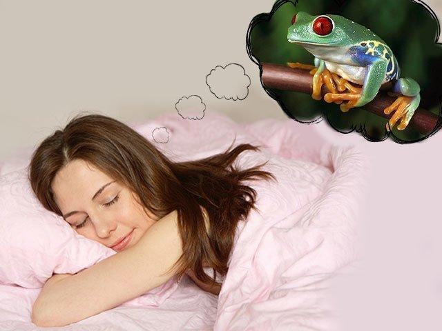 К чему снится лягушка женщине сонник