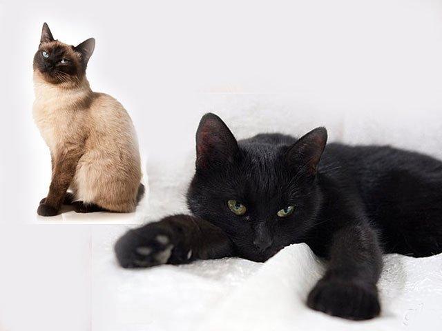 Сонник 🌛 черная кошка приснилась: к чему снится черная кошка во сне