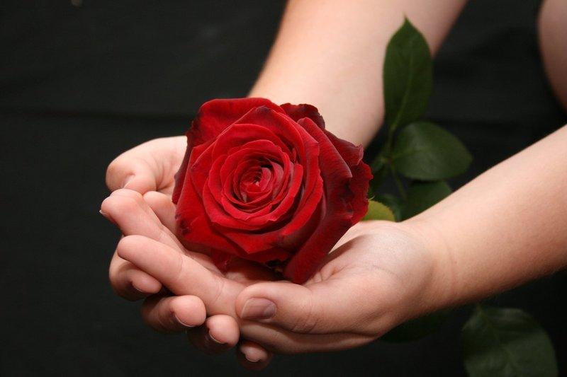 Действия с розой во сне