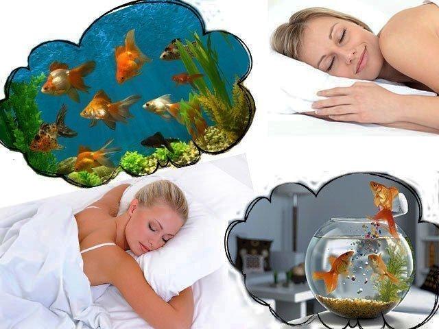 Сонник к чему снятся аквариумные рыбки