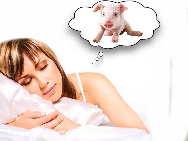 К чему снится свинья сонник миллера