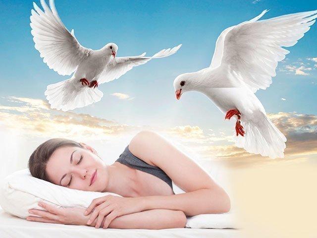 Сон про голубей