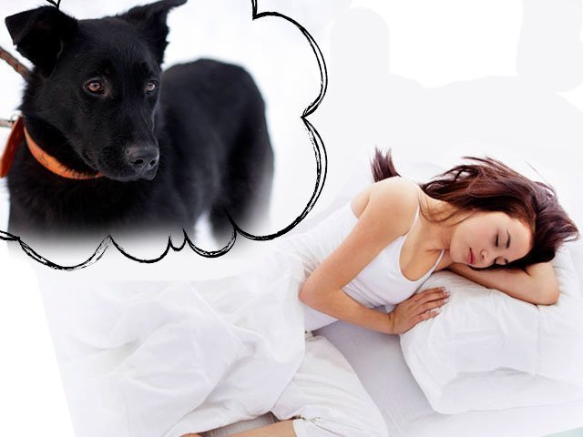Собака была наполовину человеком, когда я её била и старалась оттолкнуть от себя.