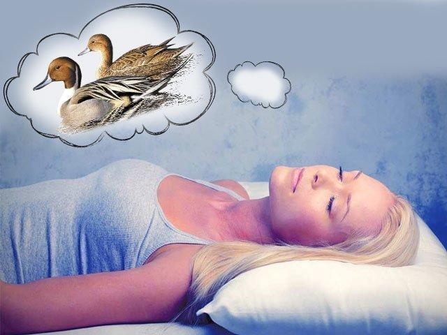 К чему снится утка? Видеть во сне уток