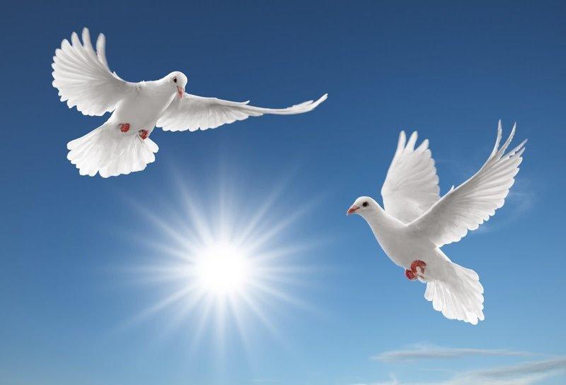 Два голубя во сне