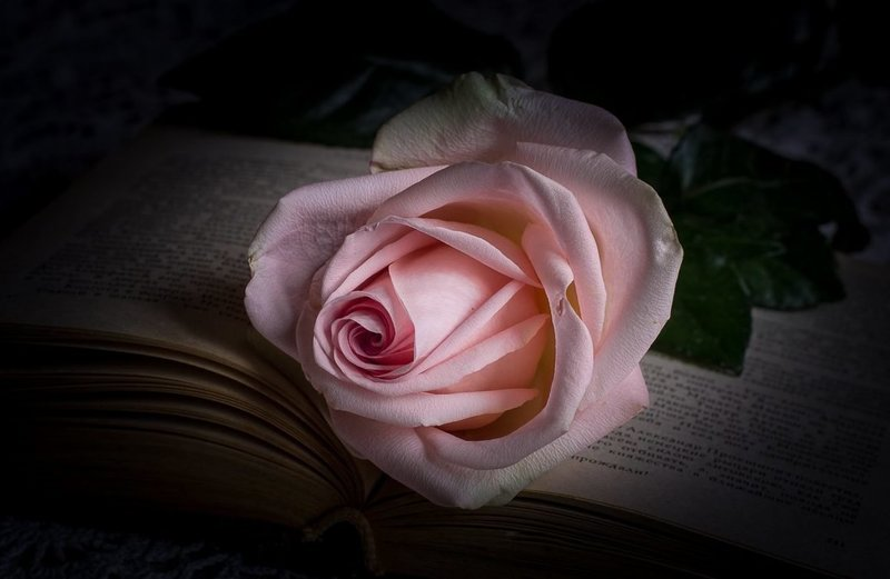 Роза по сонникам