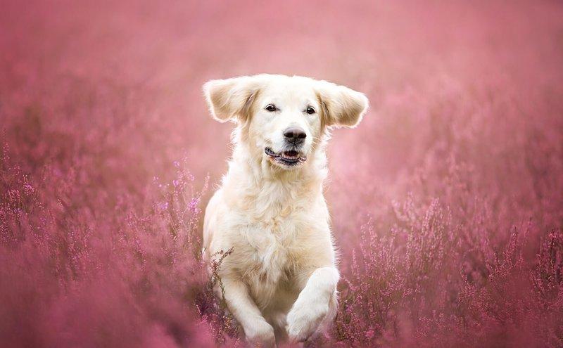 Толкование снов с собакой