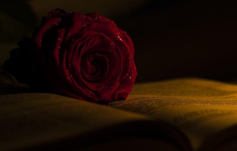 Роза по эзотерическим сонникам