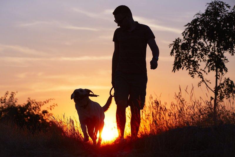 Образ собаки по мужскому соннику