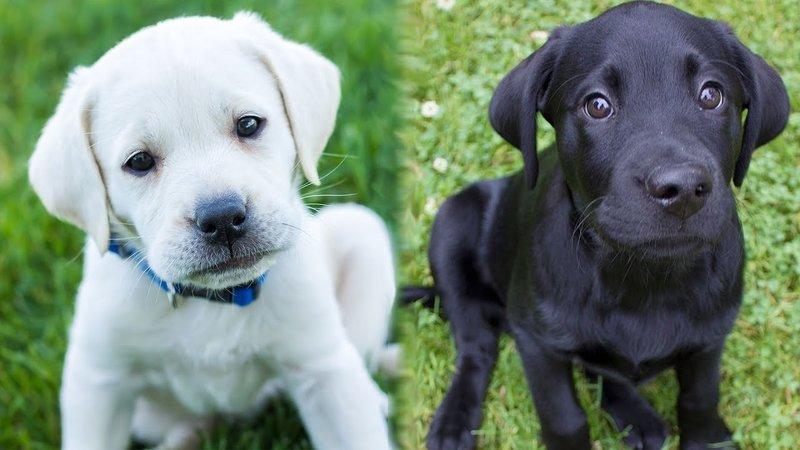 Если снятся чёрный и белый пёс