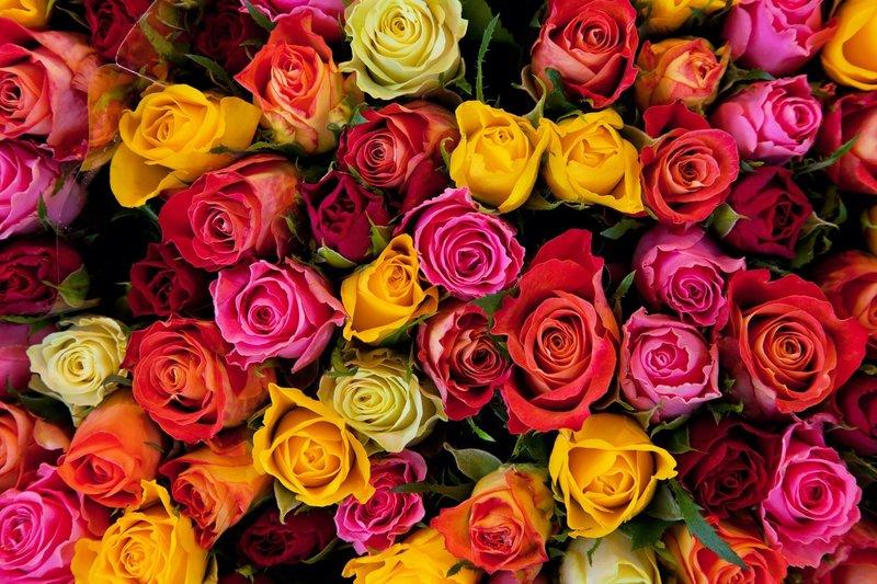Розы разных цветов во сне