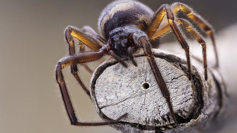 Толкование снов про пауков по сонникам
