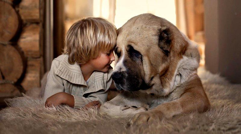 Собака по Детскому соннику