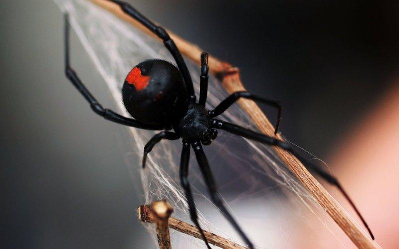Паук плетёт паутину во сне