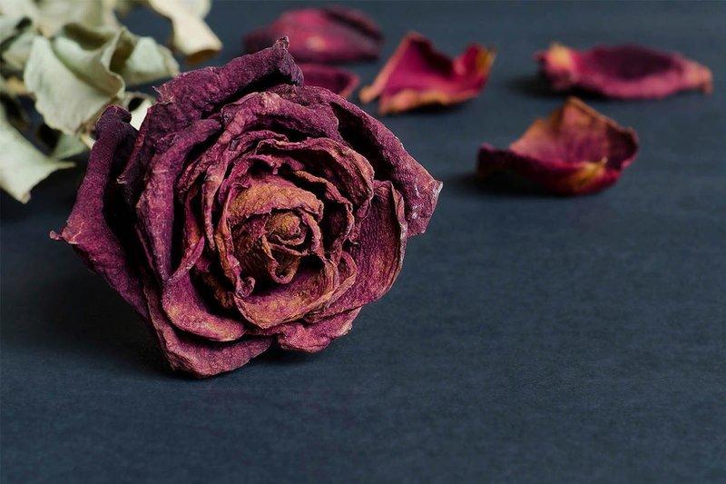 Сухая роза во сне