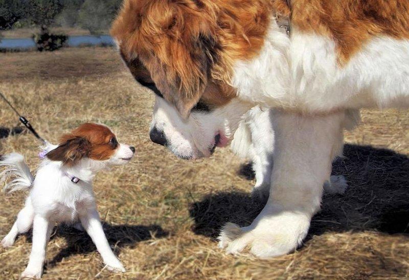 Размеры собаки во сне