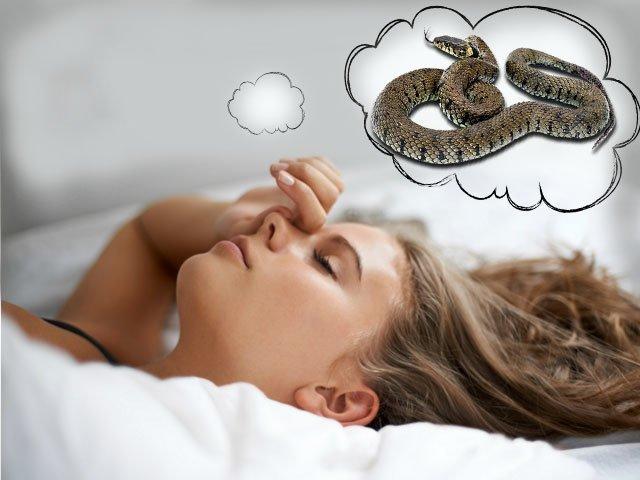 Сонник уж во сне к чему снится уж