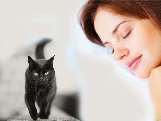 Сонник к чему снятся много черных кошек