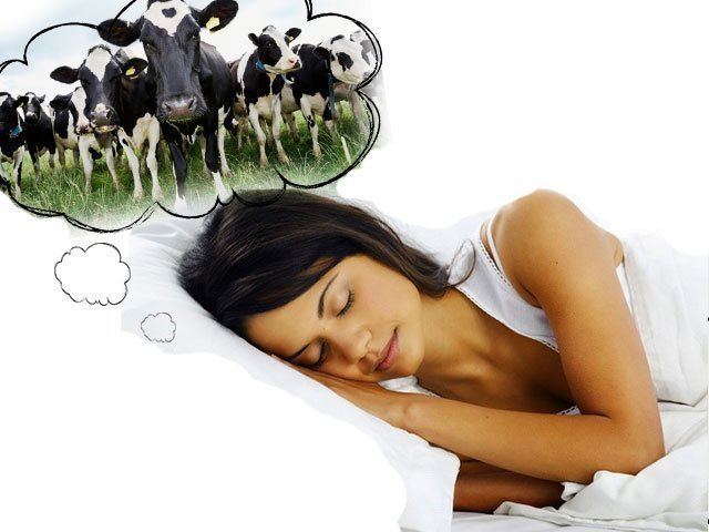 К чему женщине или мужчине снится стадо коров толкование по сонникам