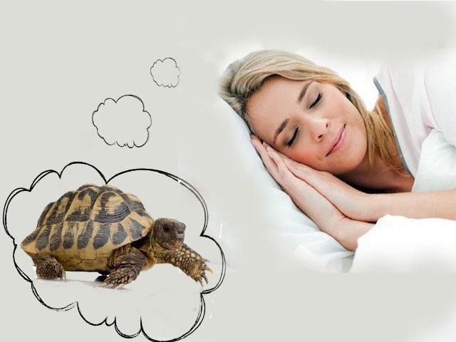 К чему снится большая черепаха на суше беременной женщине