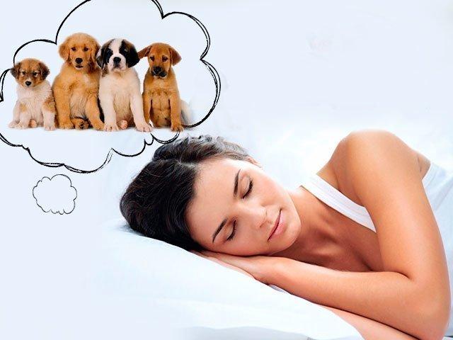 Сонник толкование снов маленькие собачки