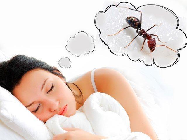 Сонник муравьи к чему снится муравьи во сне