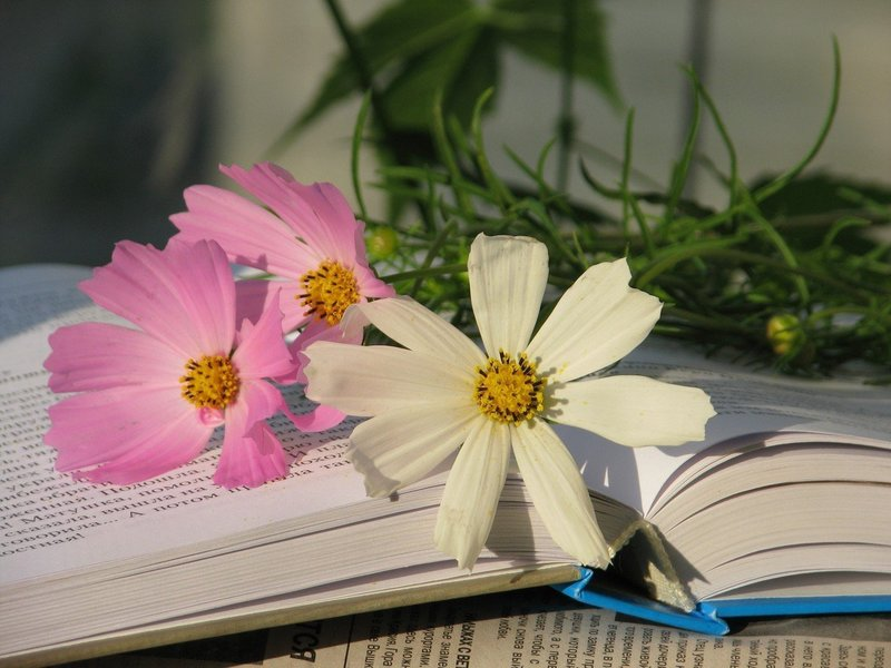Цветы по сонникам