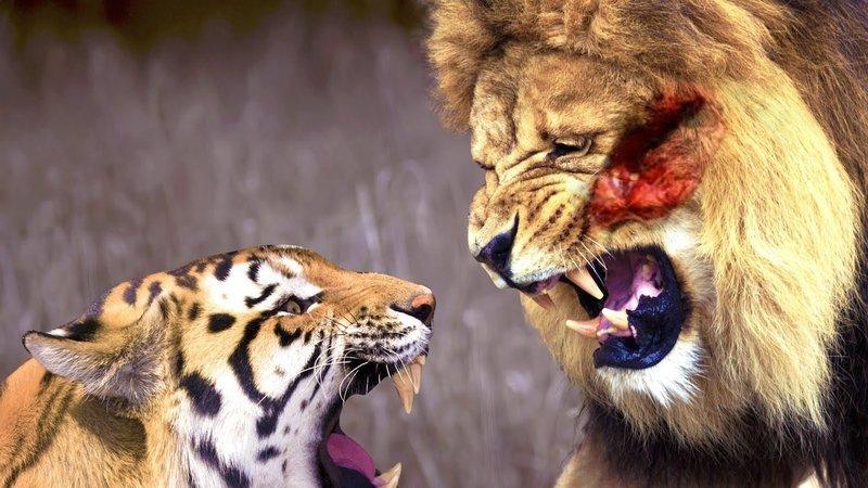 Лев и тигр во сне- значение