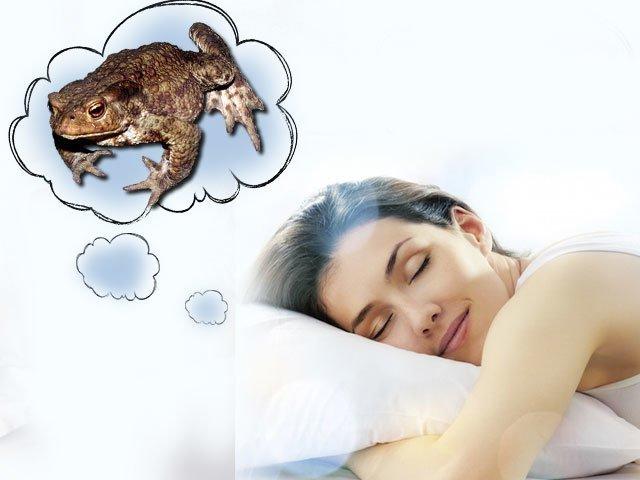 К чему снится жаба, сонник – жаба во сне