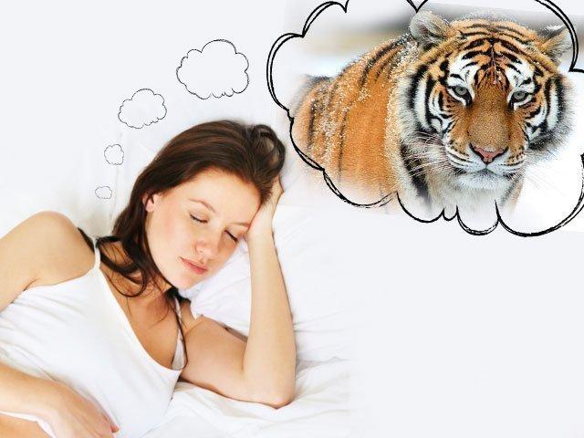 Увиденный во сне агрессивно настроенный тигр предупреждает об опасности.