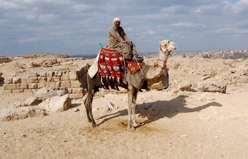 Человек во сне про верблюда