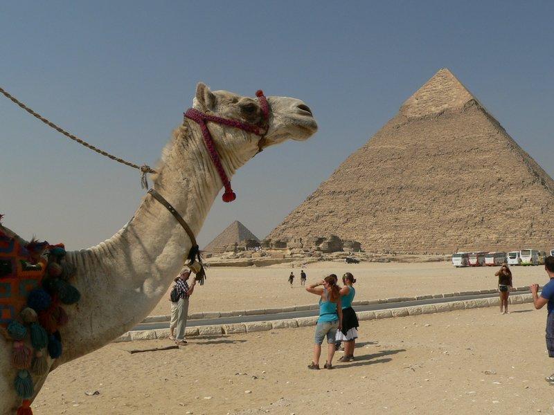 Пейзаж во сне про верблюда