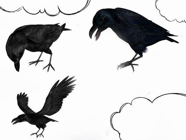 К чему снится черный ворон сонник