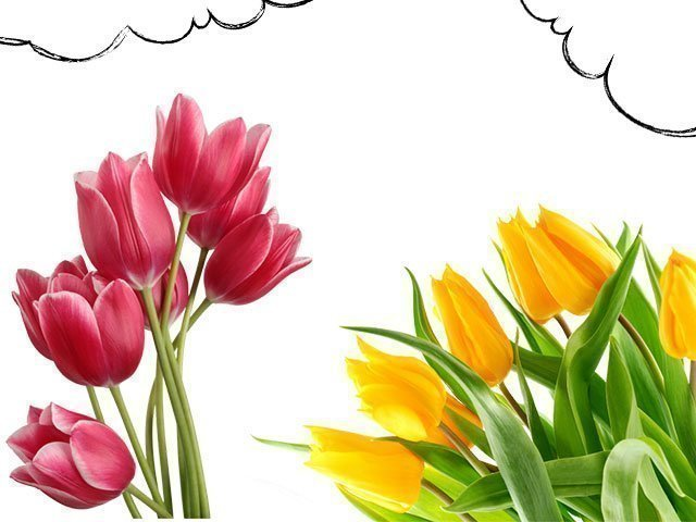 Снятся тюльпаны к чему - красные тюльпаны к чему снятся сонник