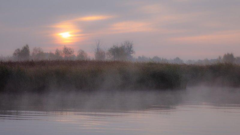 Туман по разным сонникам