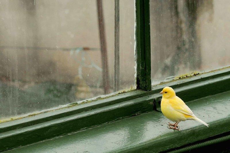 Животные на окне по соннику