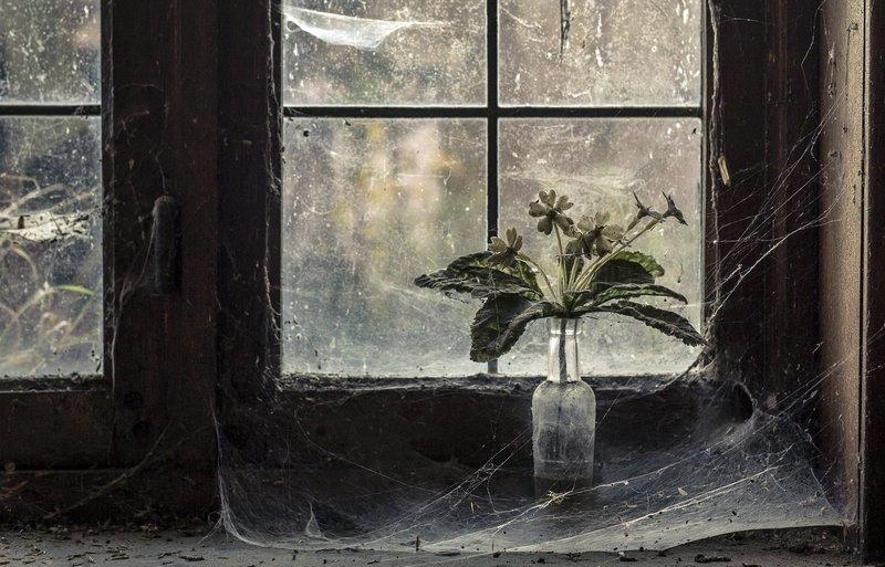Затянутое паутиной окно