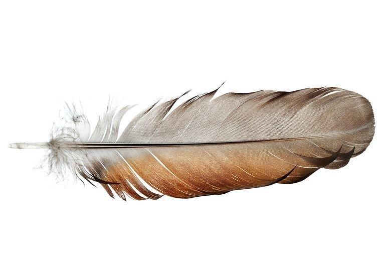 заговор на перья