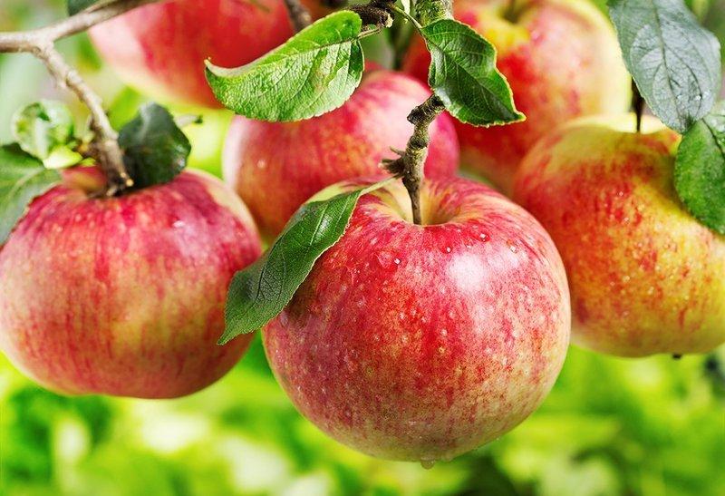 Поздравления с праздником Яблочного Спаса
