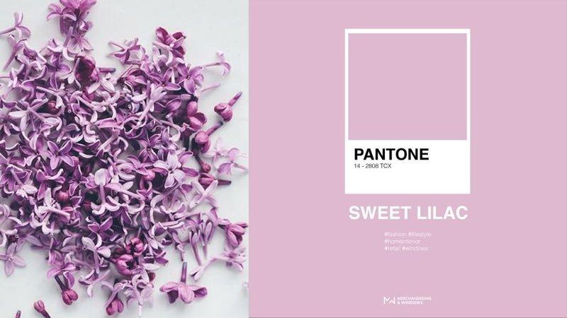Цвет Sweet Lilac