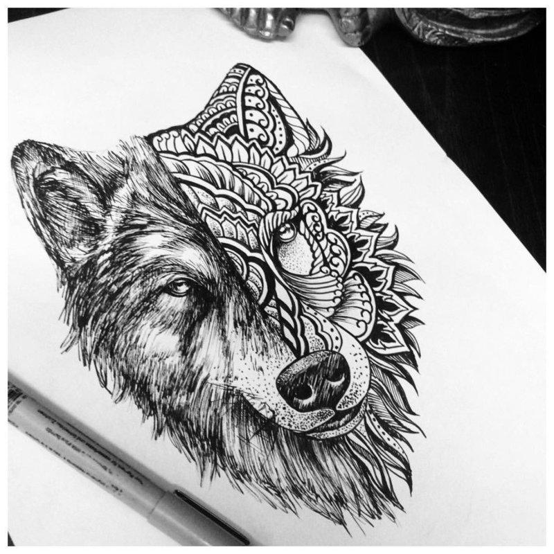 Эскиз волка в разной стилистике