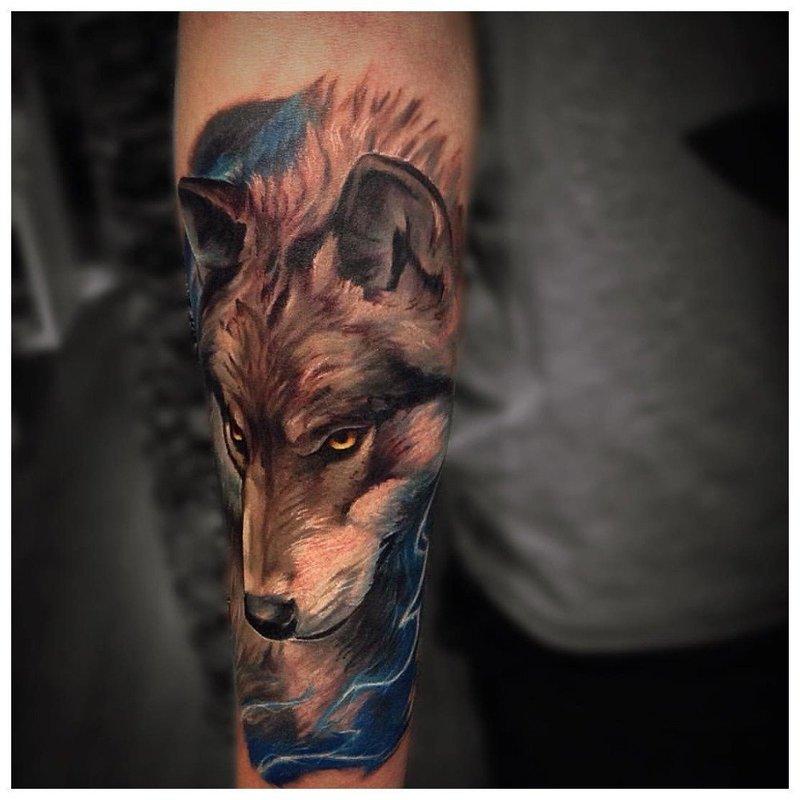 Волк в разноцветной стилистике