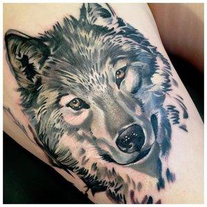 Хитрый волк - тату мужчине