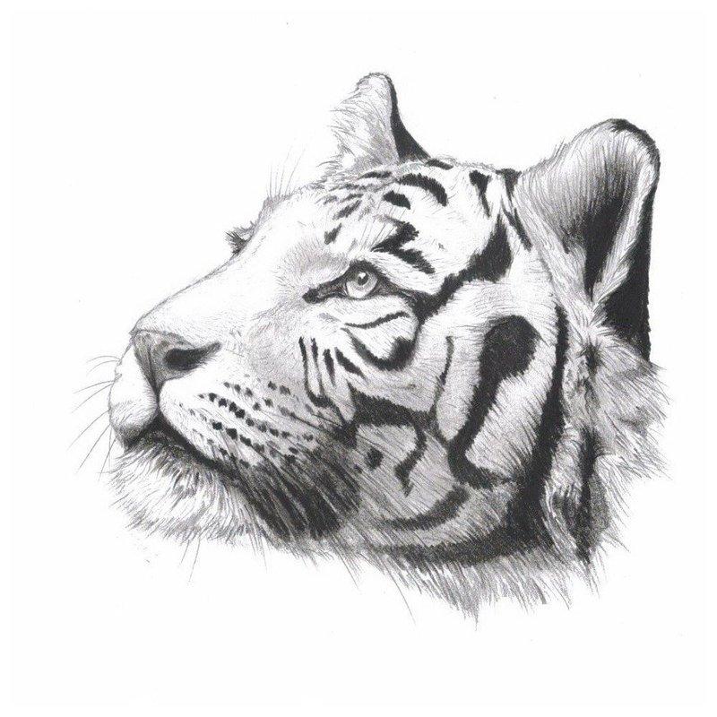 Анималистическая тематика эскиза для тату