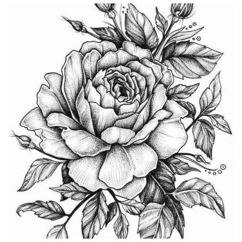 Роза - эскиз для тату