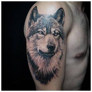 Взрослый волк - тату на плече у мужчины