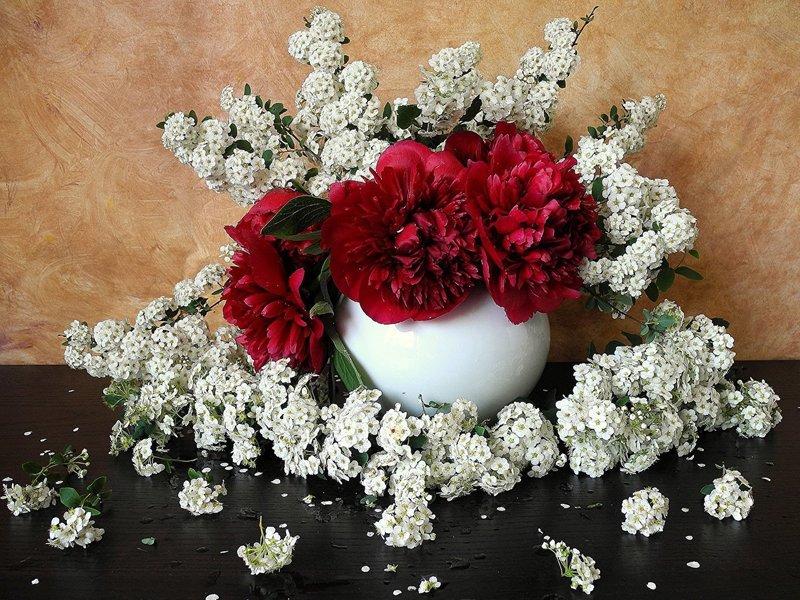 Красные цветы с жасмином