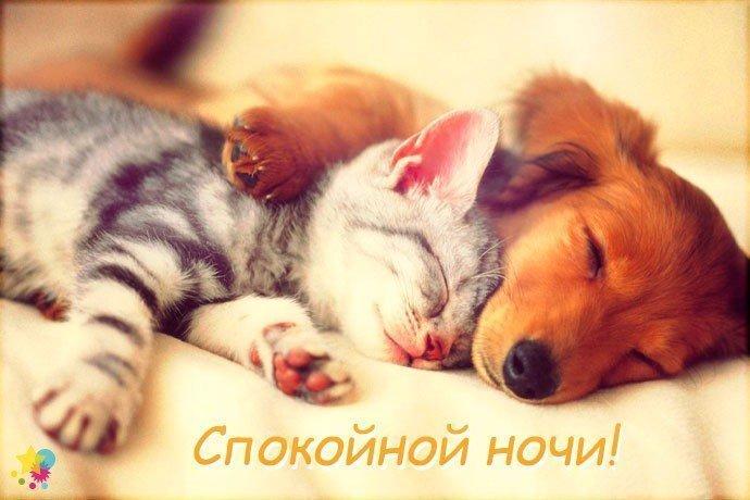 Нежное поздравление спокойной ночи